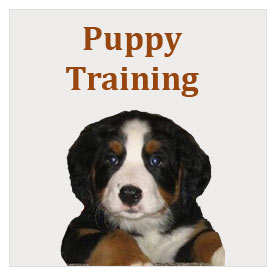 Worcester Dogs Puppy Training